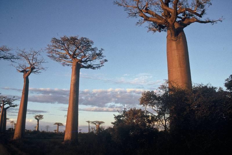 Expo-Photo sur Madagascar à [...]