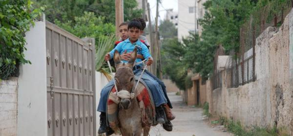 A Boy, a Wall and a Donkey