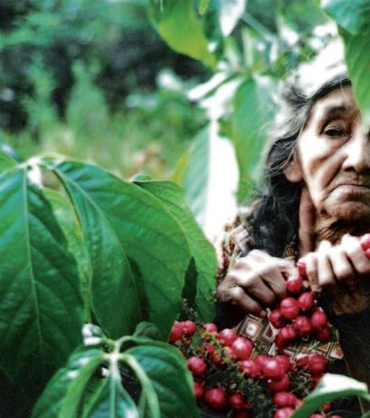 Les Indiens d'Amazonie ont droit aux crédits carbone