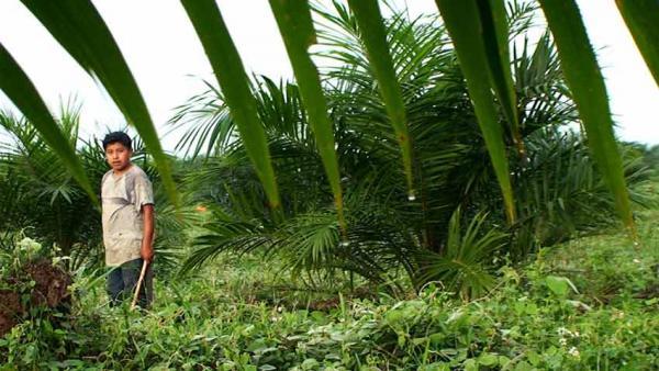 Ciné-Club Quintessence au CCF de Cotonou / samedi 12 [...]