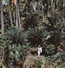 Entebe Botanical Gardens